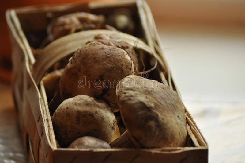 E 在篮子,Lubyanka的可食的蘑菇 采蘑菇 免版税库存照片