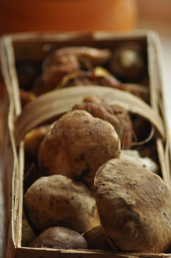 E 在篮子,Lubyanka的可食的蘑菇 采蘑菇 免版税库存图片