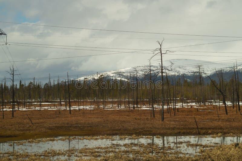 E 多雪的小山和森林输电线在山 免版税库存图片