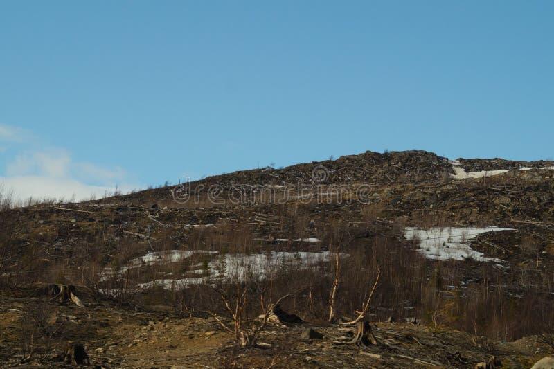 E 多雪的小山和森林 库存照片