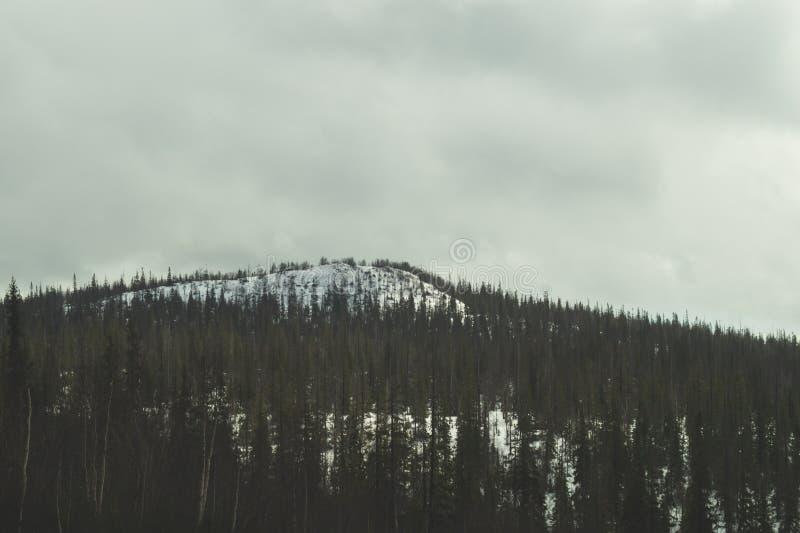 E 多雪的小山和森林 免版税库存照片