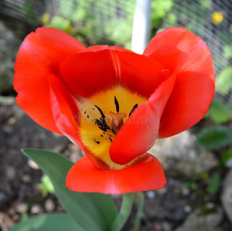 E 好的花在庭院里盛夏,在一好日子 绿色风景 免版税库存照片