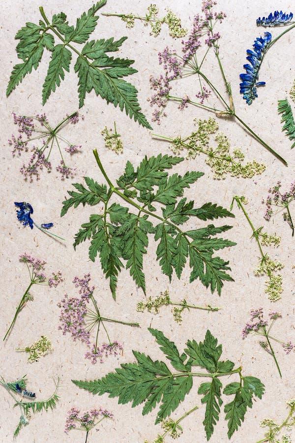 E 干草甸花和草本在粗砺的包装纸 免版税库存图片