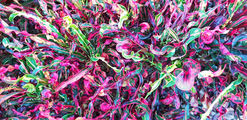 E 美好的五颜六色的花卉布局 热带叶子背景 库存照片