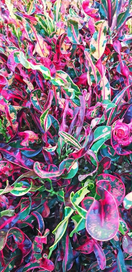 E 美好的五颜六色的花卉布局 热带叶子背景 库存例证