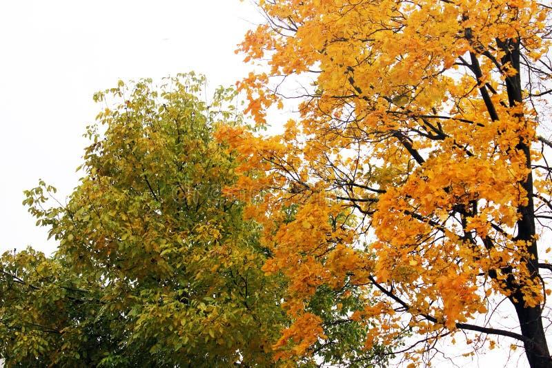 E 美好的秋天 库存图片