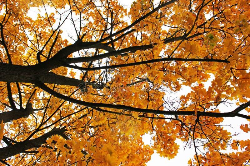 E 美好的秋天 免版税库存照片