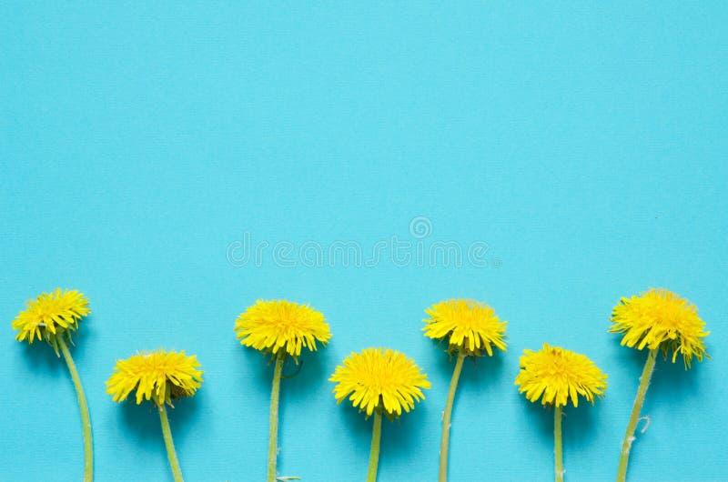 E 蒲公英黄色花在白色背景的 库存图片