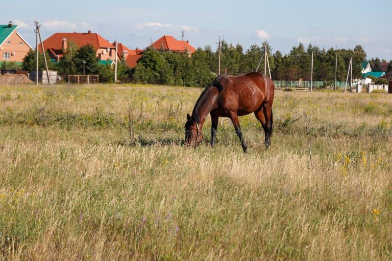 E 马在领域吃草在一清楚的好日子反对天空蔚蓝 免版税库存照片