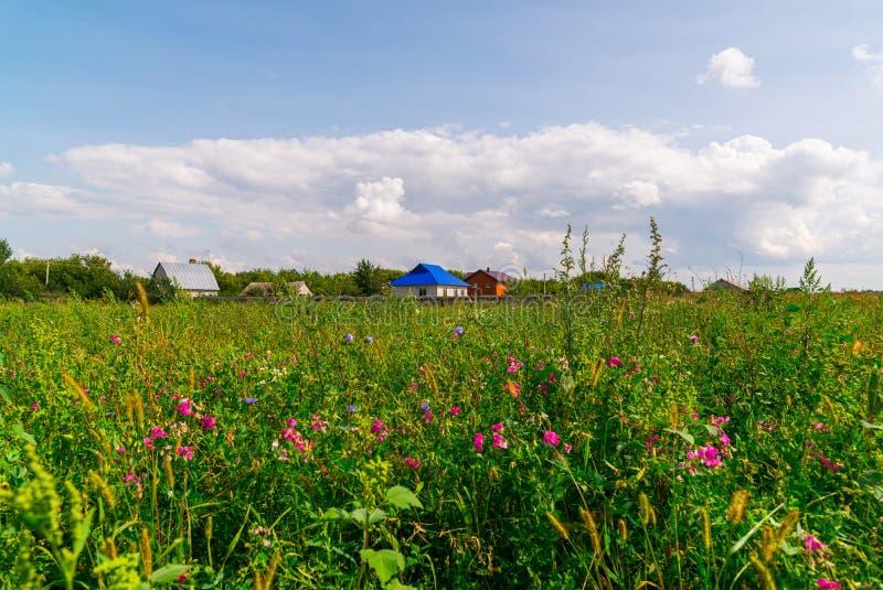 Сельский пейзаж с цветами на переднем плане стоковое фото