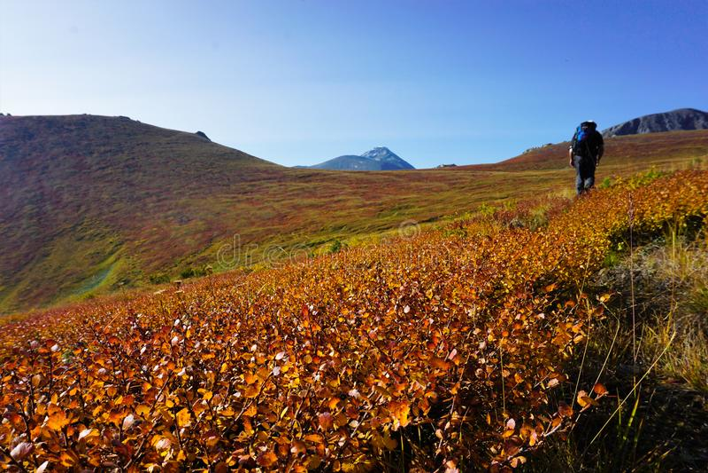 Позднее лето в высокогорье, широкий склон с фигурой туриста на расстоянии стоковая фотография rf