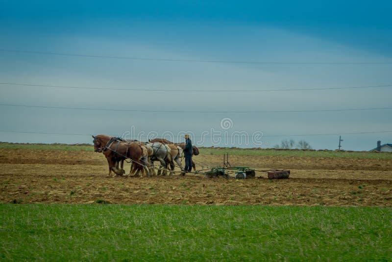 Вид на сельхозугодников, использующих много лошадей, засаживает античный плуг на поле стоковая фотография