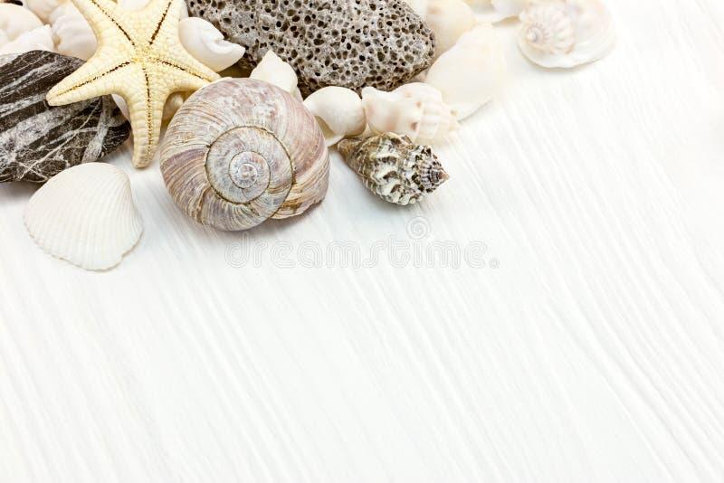 различные раковины, звездные рыбы и галька на белом деревянном фоне стоковые фотографии rf