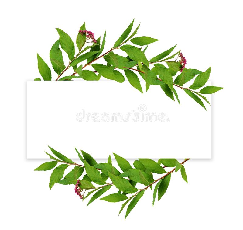 Фрама из зеленых листьев и маленькие розовые цветы с красной круглой карточкой для текста стоковое изображение rf