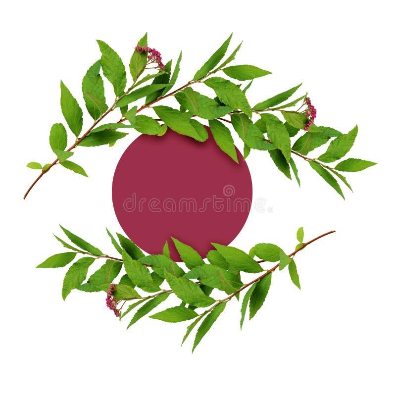 Фрама из зеленых листьев и маленькие розовые цветы с красной круглой карточкой для текста стоковые изображения rf