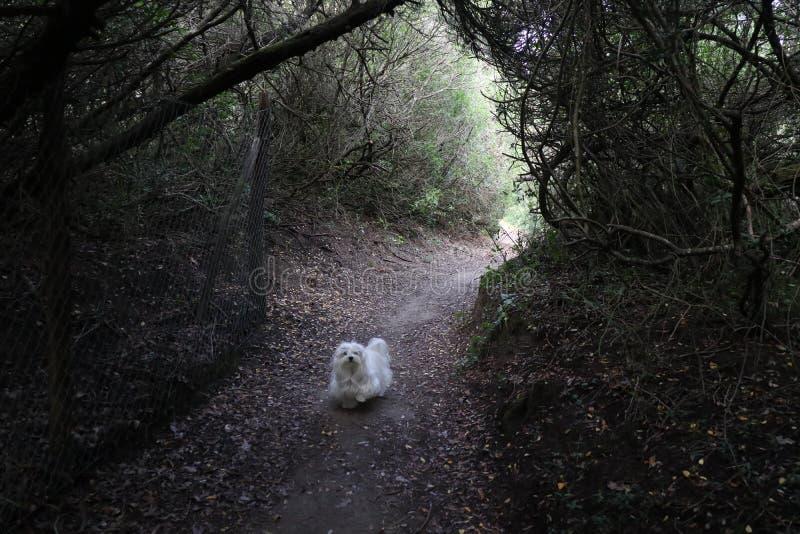 Собака в лесе стоковая фотография