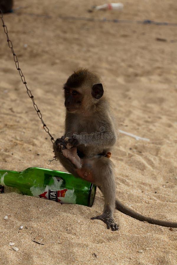 маленький пенький сидит на пивной бутылке стоковые фото