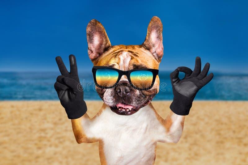 E Animal na praia, no mar e no c?u fotografia de stock royalty free