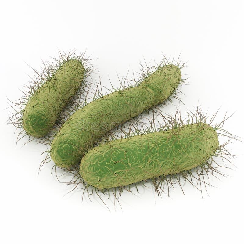 e Bacterias de Escherichia Coli stock de ilustración