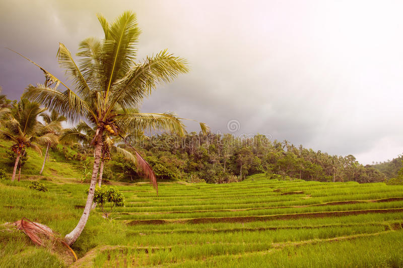 E Bali, Indonesien stockfotografie