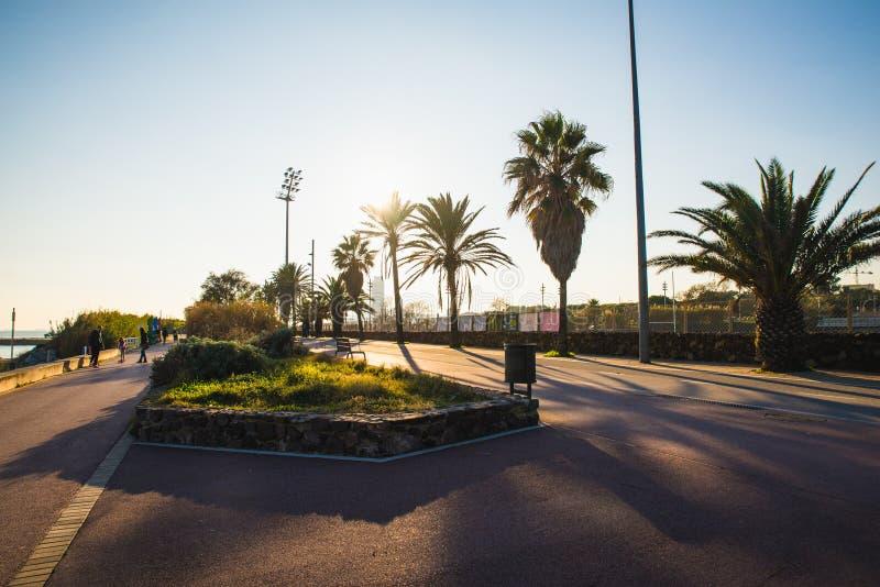 E 12 2018 : Beau coucher du soleil vu d'une rue avec beaucoup de palmiers photos libres de droits