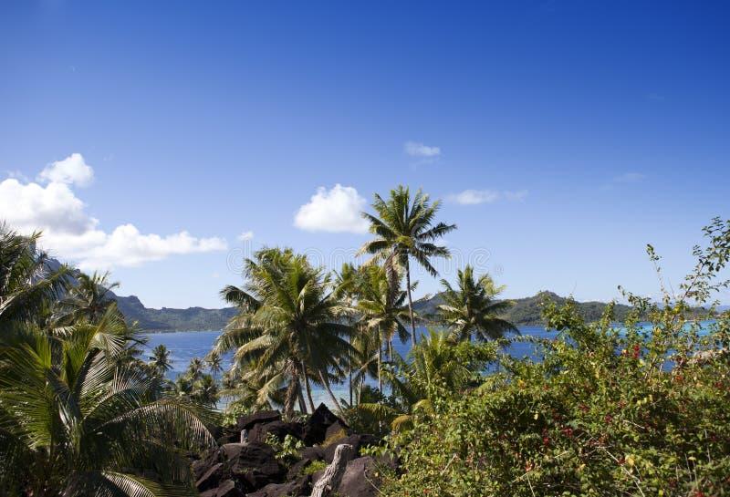 E Berg havet, palmträd fotografering för bildbyråer