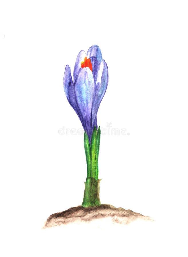 E Botanisch hand geschilderd ontwerpelement royalty-vrije illustratie
