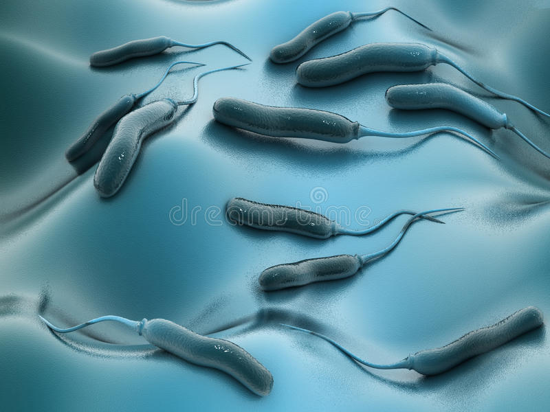 E coli Bacteriën royalty-vrije stock afbeelding