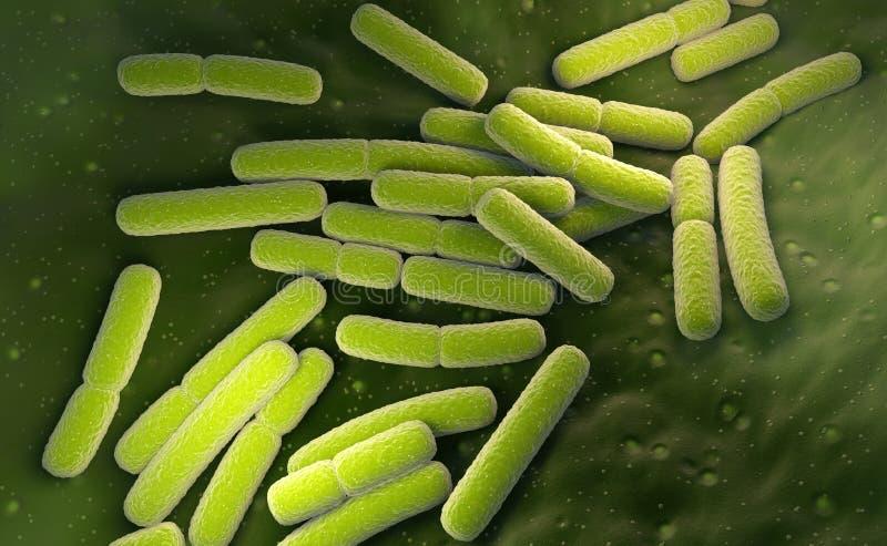 E coli Cellule dei batteri di Escherichia coli illustrazione vettoriale