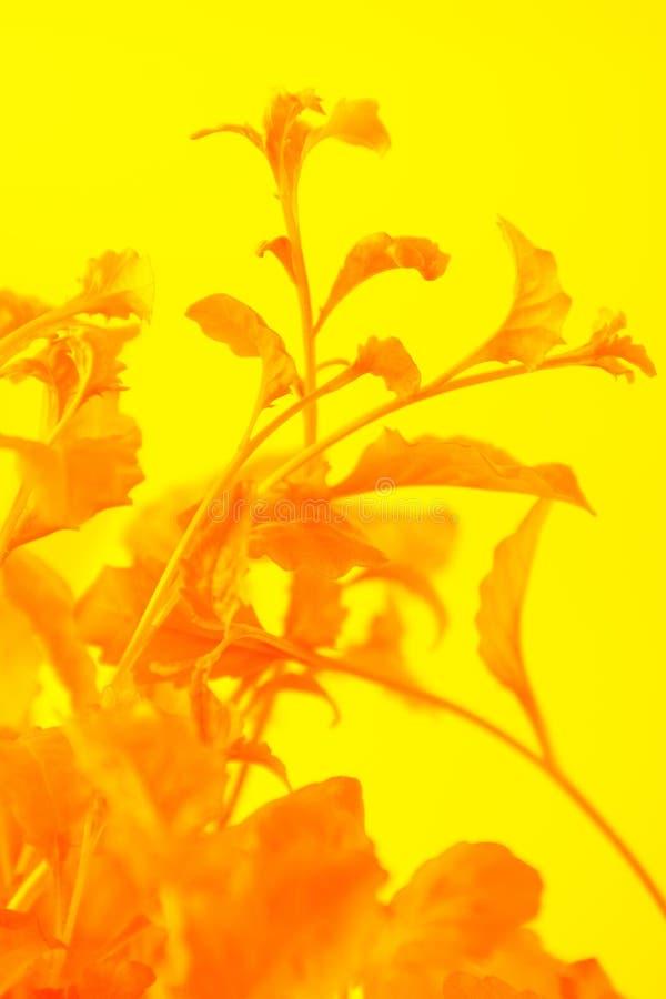 E Concept exotique d'été minimal avec l'espace de copie sélecteur photographie stock