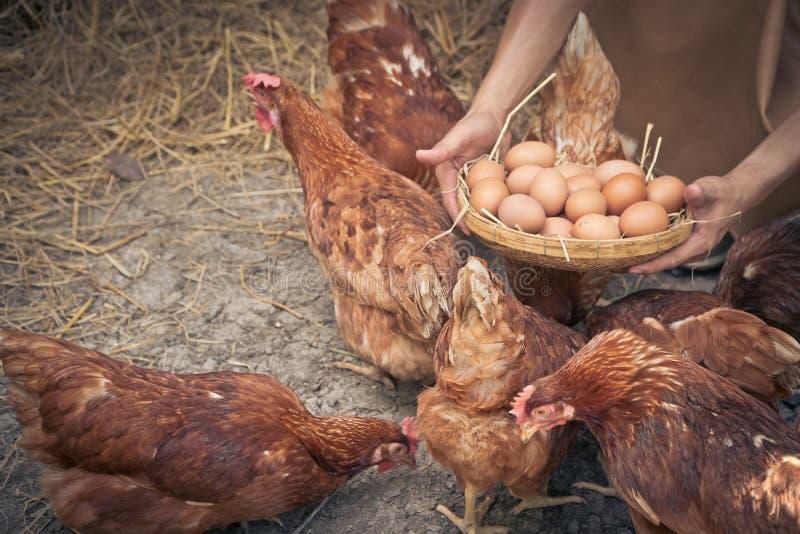 E Concept organisch landbouwbedrijf stock fotografie
