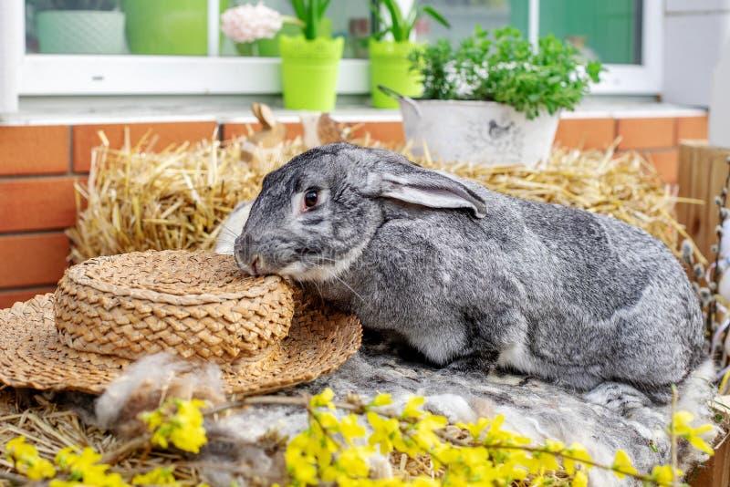 E Concepto de Pascua, del animal, de la primavera, de la celebraci?n y del d?a de fiesta imagen de archivo libre de regalías
