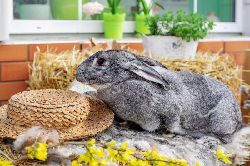 E Concepto de Pascua, del animal, de la primavera, de la celebraci?n y del d?a de fiesta imagen de archivo