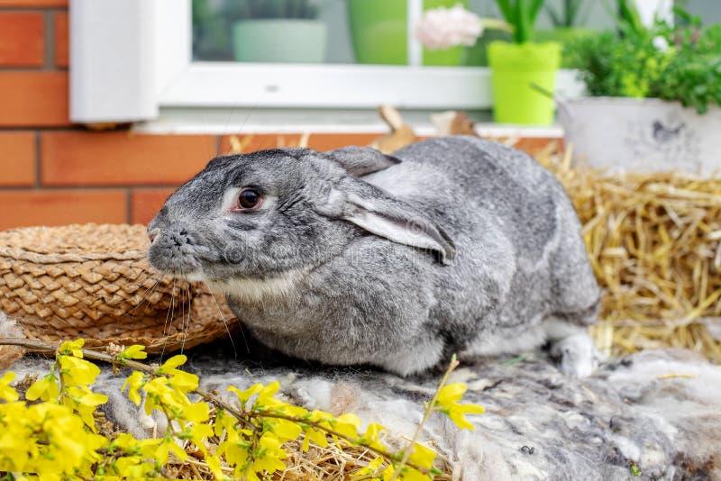 E Concepto de Pascua, del animal, de la primavera, de la celebraci?n y del d?a de fiesta fotos de archivo