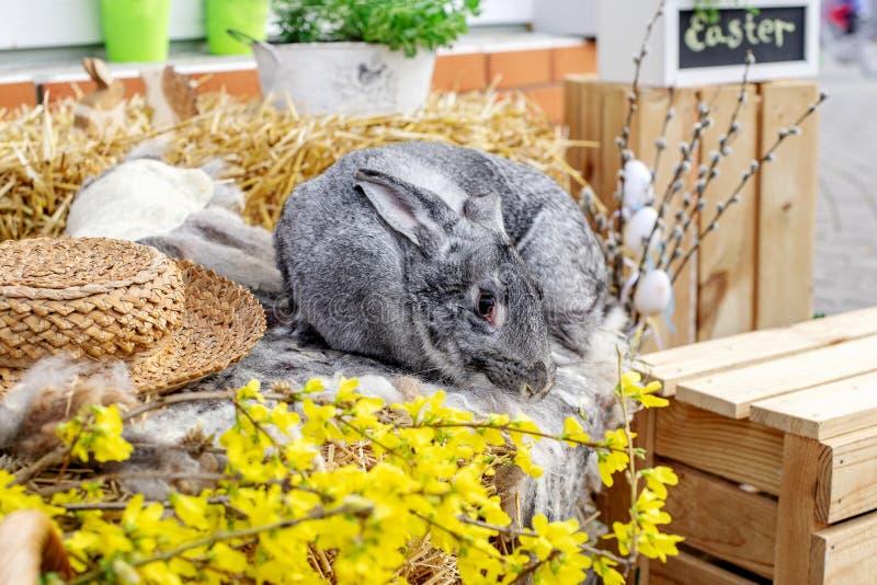 E Concepto de Pascua, del animal, de la primavera, de la celebraci?n y del d?a de fiesta imagenes de archivo