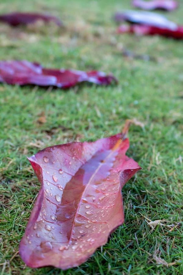 E De aard van de herfst Lange schaduwen en blauwe hemel Aard dichte omhooggaand r royalty-vrije stock fotografie