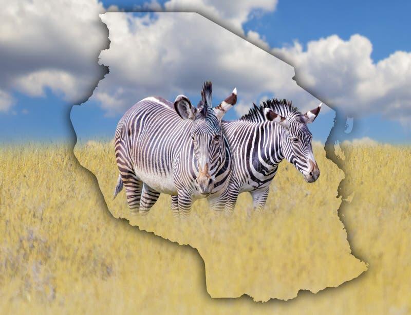 E Det är en lös djur uppehälle i Afrika Det ?r nationell afrikansk bakgrund royaltyfri bild