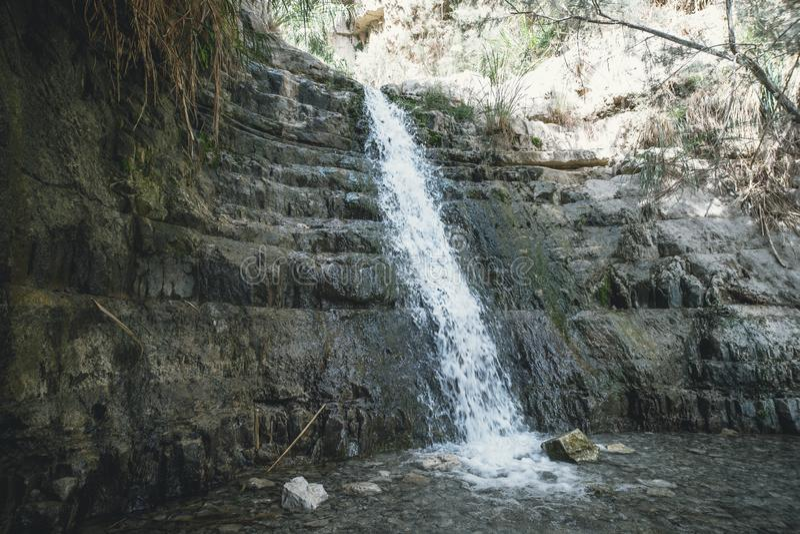 E Ein Gedi - riserva naturale e parco nazionale, Israele fotografia stock libera da diritti