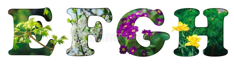 E, F, G, H imagens de stock royalty free
