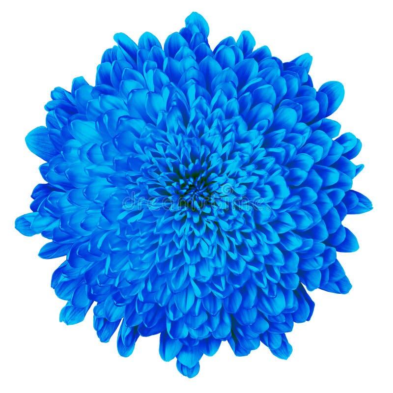 E Fim da flor em botão acima Elemento do projeto fotos de stock