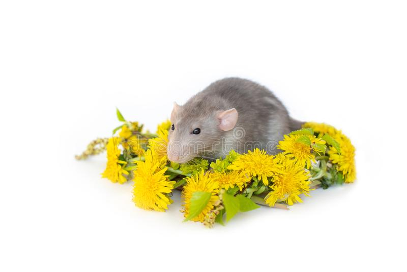 E Flores del Tansy imagen de archivo