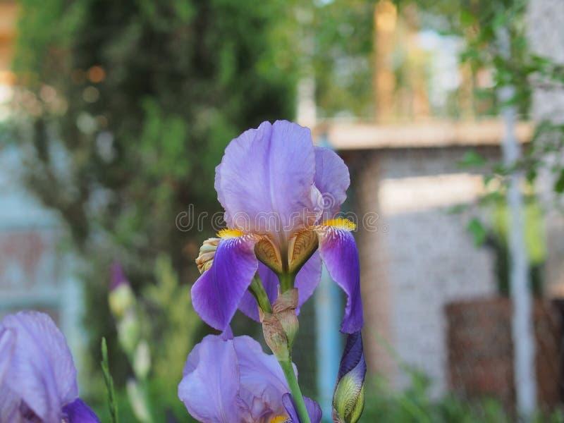 E Floriculture royaltyfria bilder