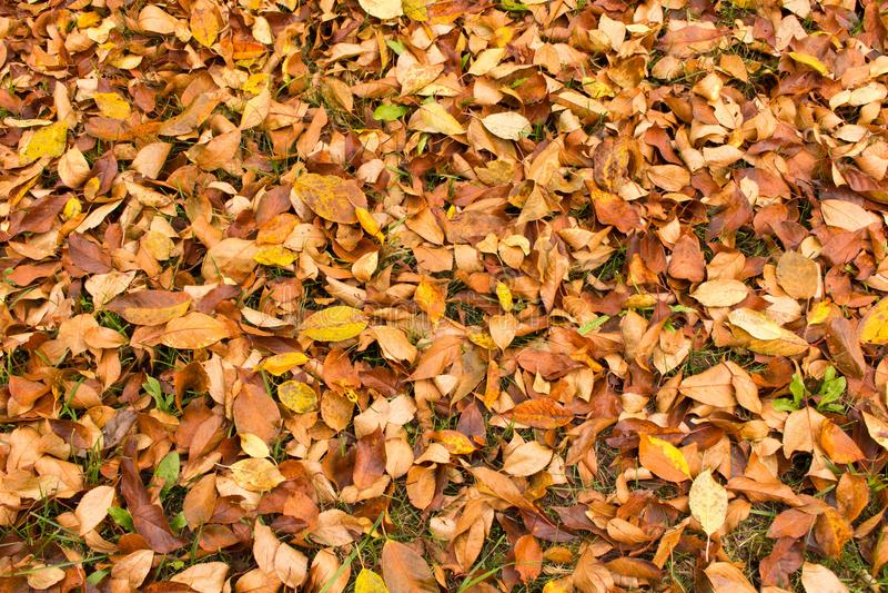 E Fondo de hojas caidas o fotografía de archivo libre de regalías