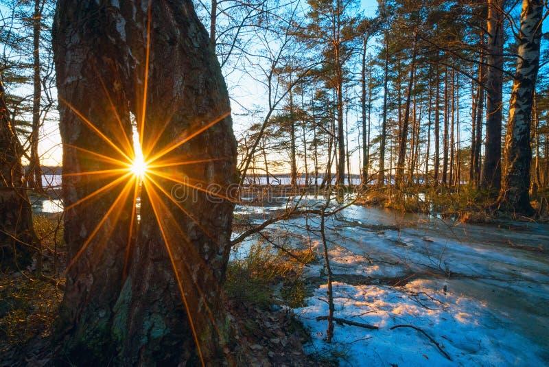 E Frühlingswaldlandschaft stockfotografie