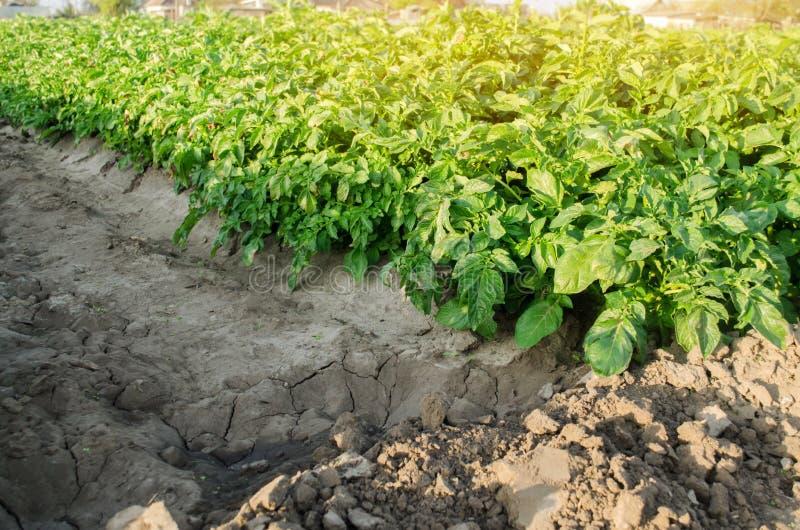 E gr?nsakrader Jordbruks- jordning Ny åkerbruk bruka lantgård för skördar Potatisv?xt arkivfoto