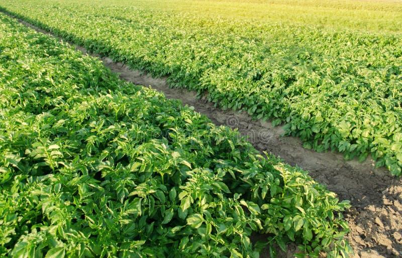 E gr?nsakrader Lantbruk jordbruk Landskap med jordbruks- land Nytt organiskt arkivfoto