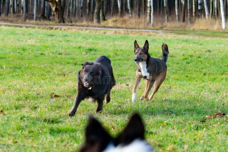 E Harmonisches Verhältnis zum Hund: Erziehung und Ausbildung Hundespiel mit einander lizenzfreie stockfotografie