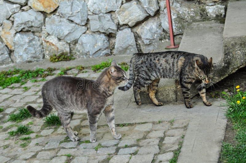 E Haustier outdoor stockbilder