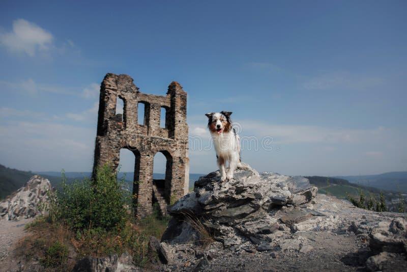 E Het reizen met huisdier royalty-vrije stock fotografie
