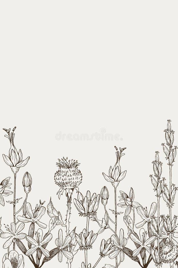 E Ilustração gravada botânica do vintage Elementos naturais tirados mão do vetor Estilo do esboço ilustração royalty free